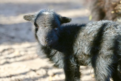 Des bébés au sein de notre mini ferme