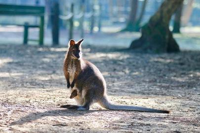 Vidéo : les premiers bébés du Zoo de Labenne