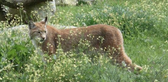 Le journal SUD-OUEST parle du Zoo de Labenne