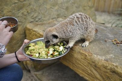 Ludivine & Valentin de Bascomania au Zoo de Labenne