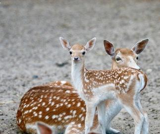 Des bébés au Zoo !
