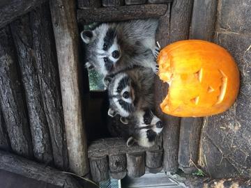 Nouveauté Halloween : un jeu défi-énigme 🎃👻