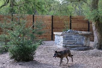 Enclos des loups