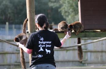 Enrichissement sur lîle aux lémuriens.